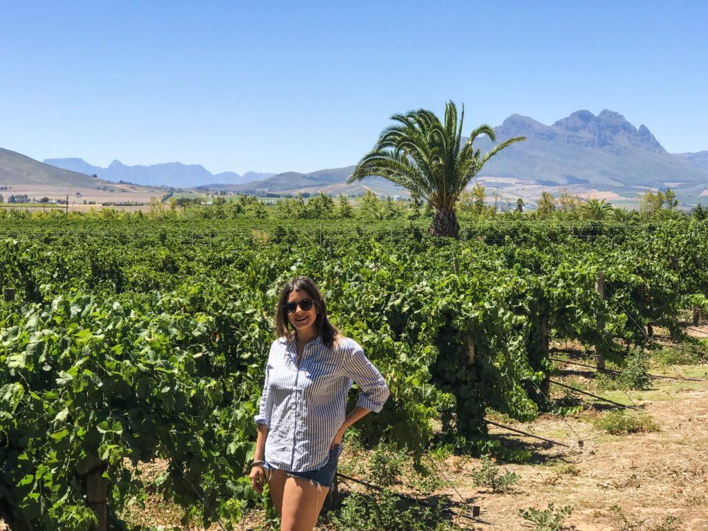 visiter le cap cape town afrique vignoble