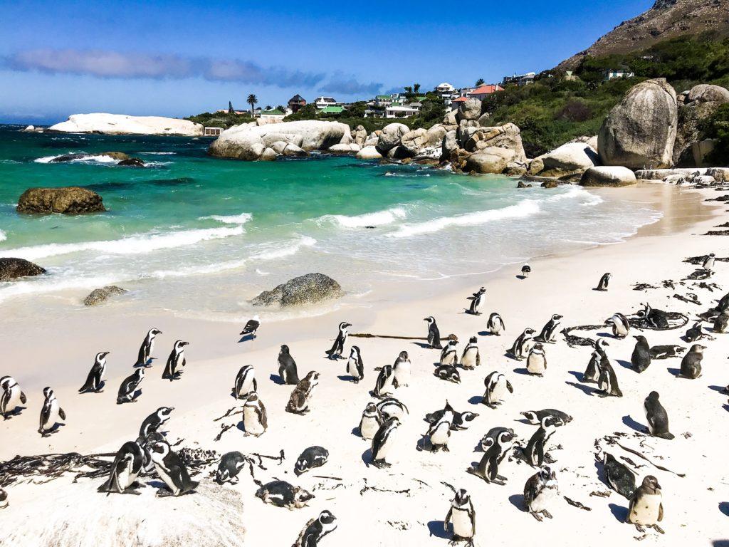 visiter le cap cape town afrique Cape point