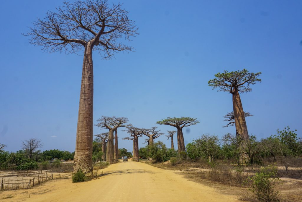 madagascar tsingy baobab lemurien antsirabe