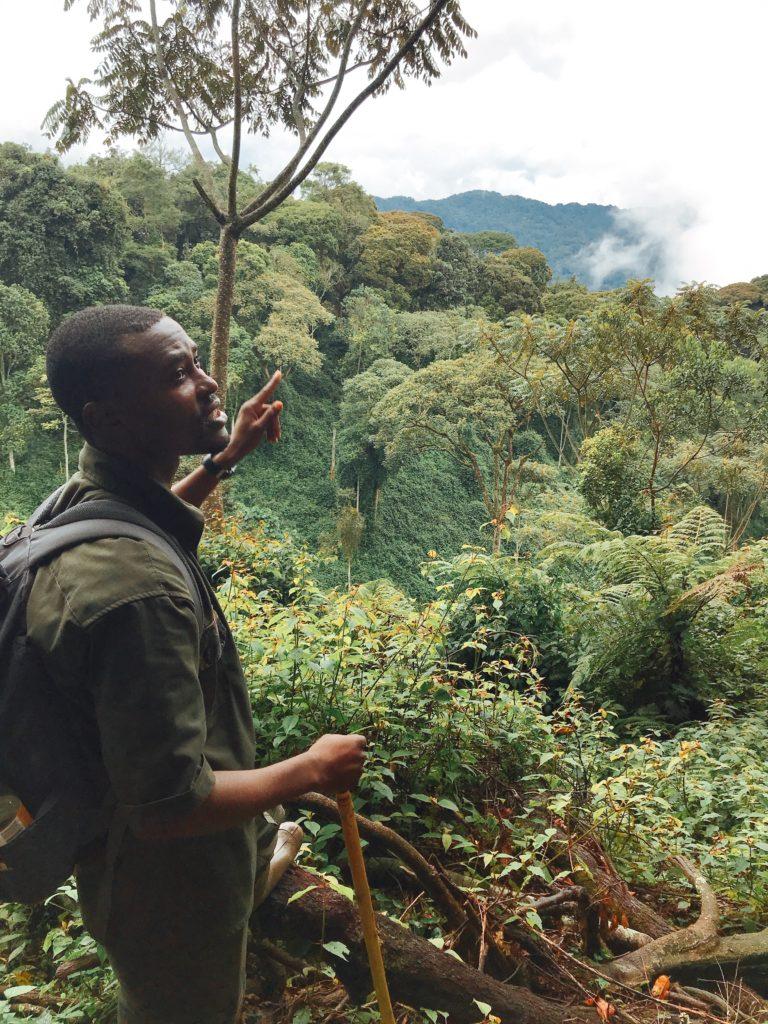 rwanda paysage canopy nyungwe foret