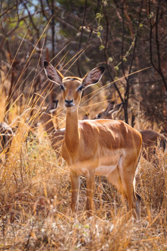 rwanda kigali paysage akagera parc